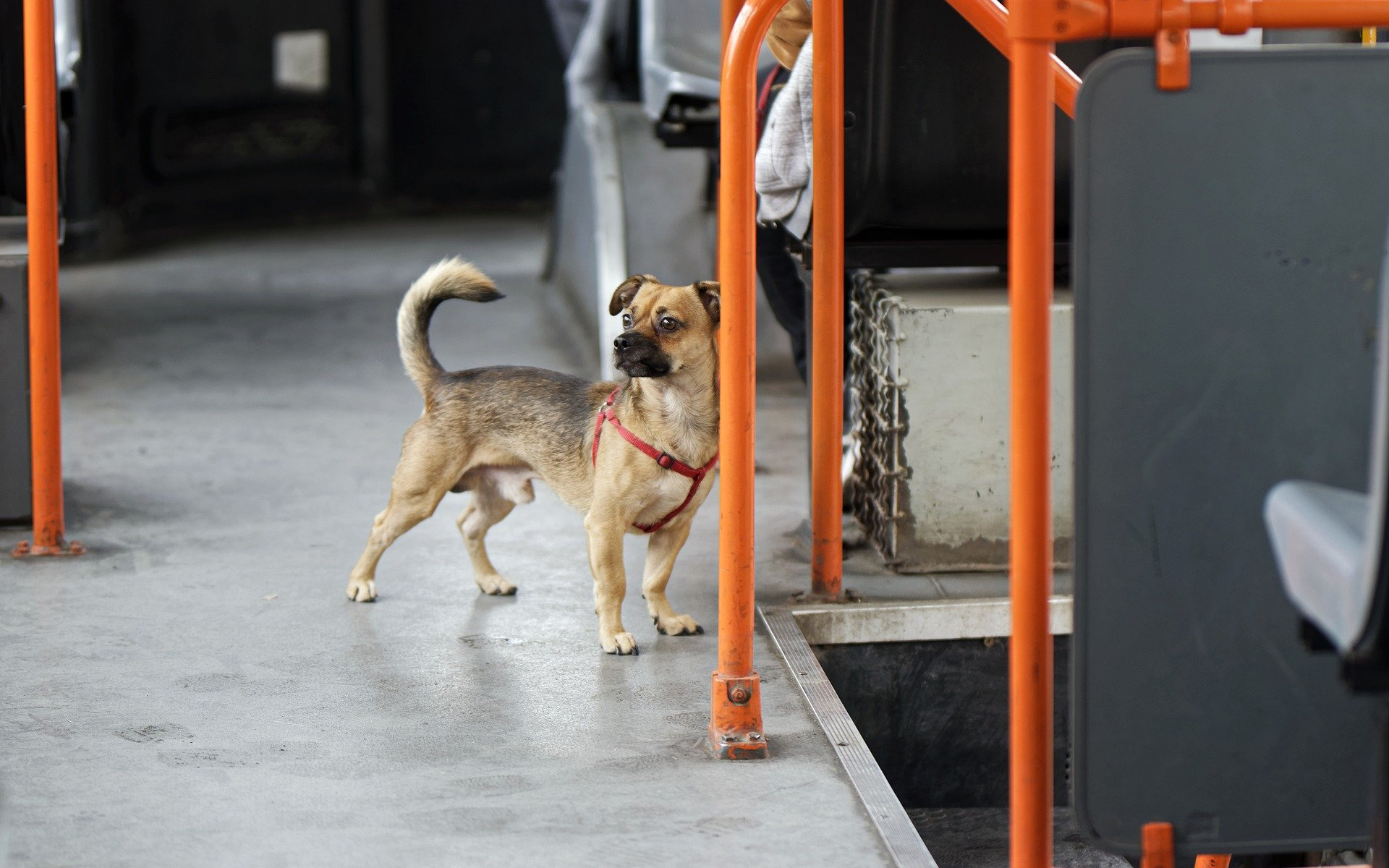 Hiring The Services Of An Animal Transport Company