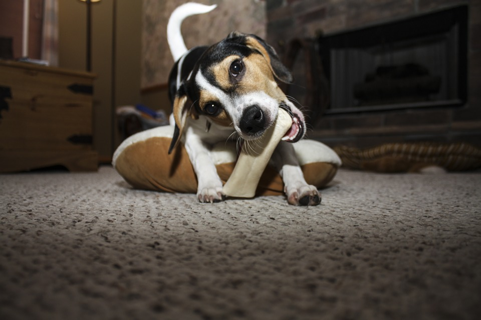 The Undeniable Benefits Of Healthy Dog Chews