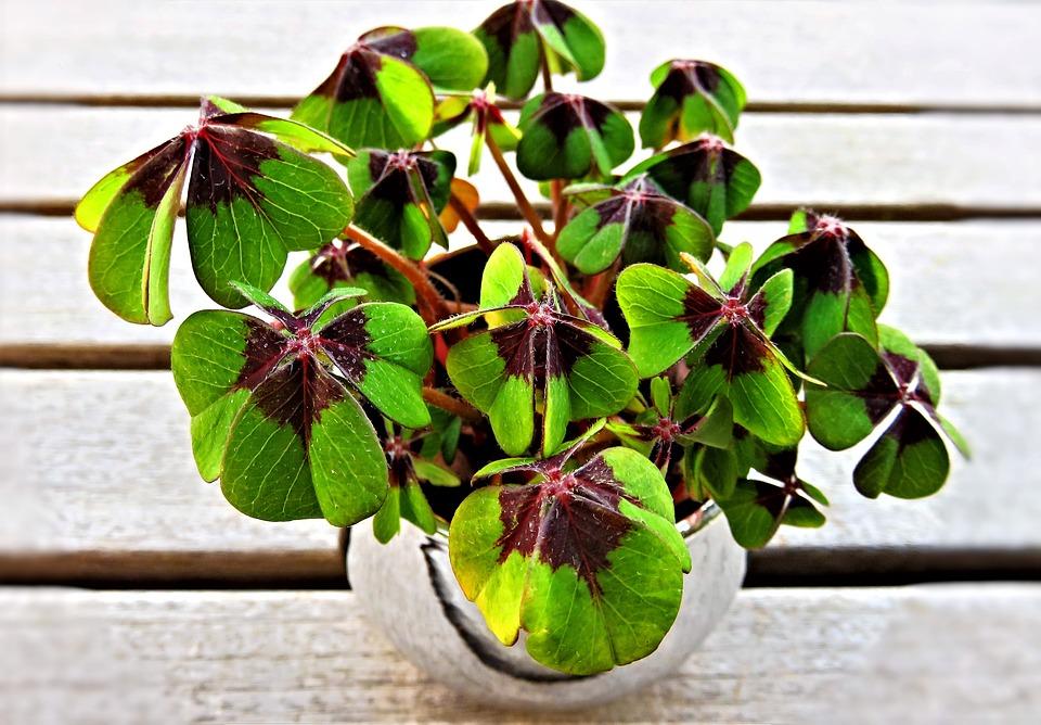 Smart Pots For Healthier Plants