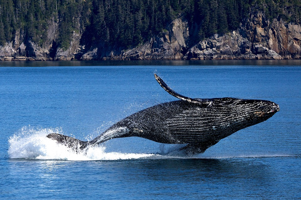 All About Whale Watching Tours Queensland