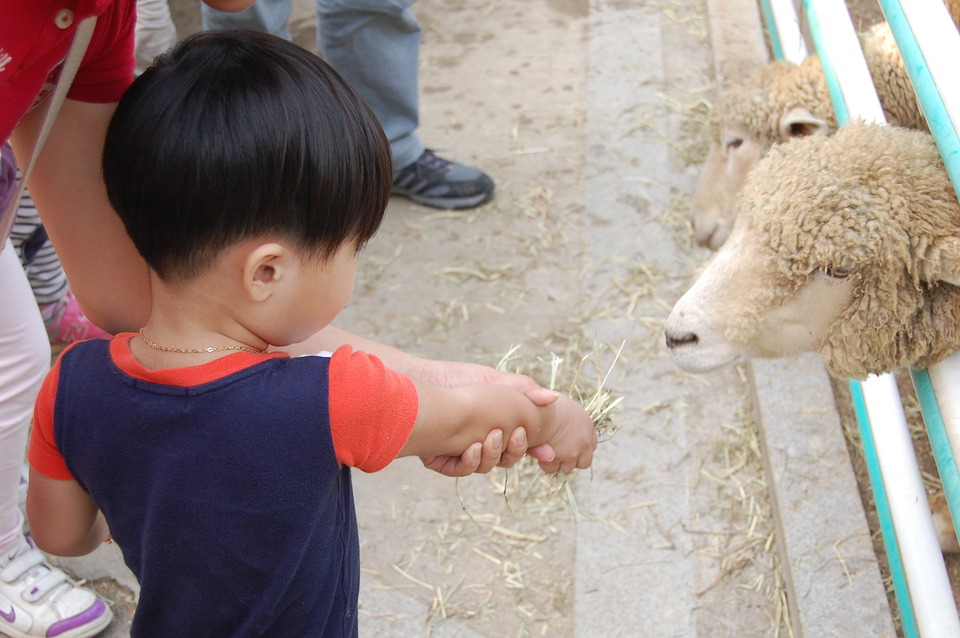 Memorable Celebrations At Birthday Petting Zoo