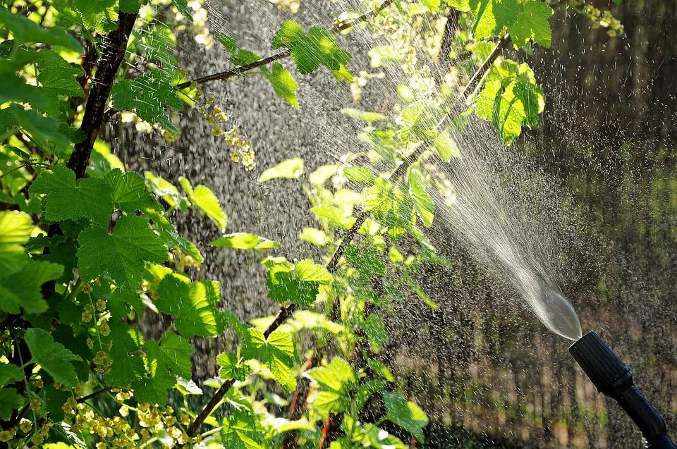 Eco Friendly Pest Services Malaysia