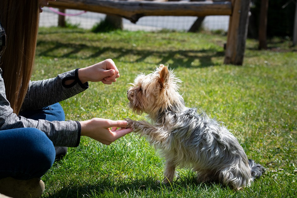 How An Excellent Dog Trainer Can Help Your Dog
