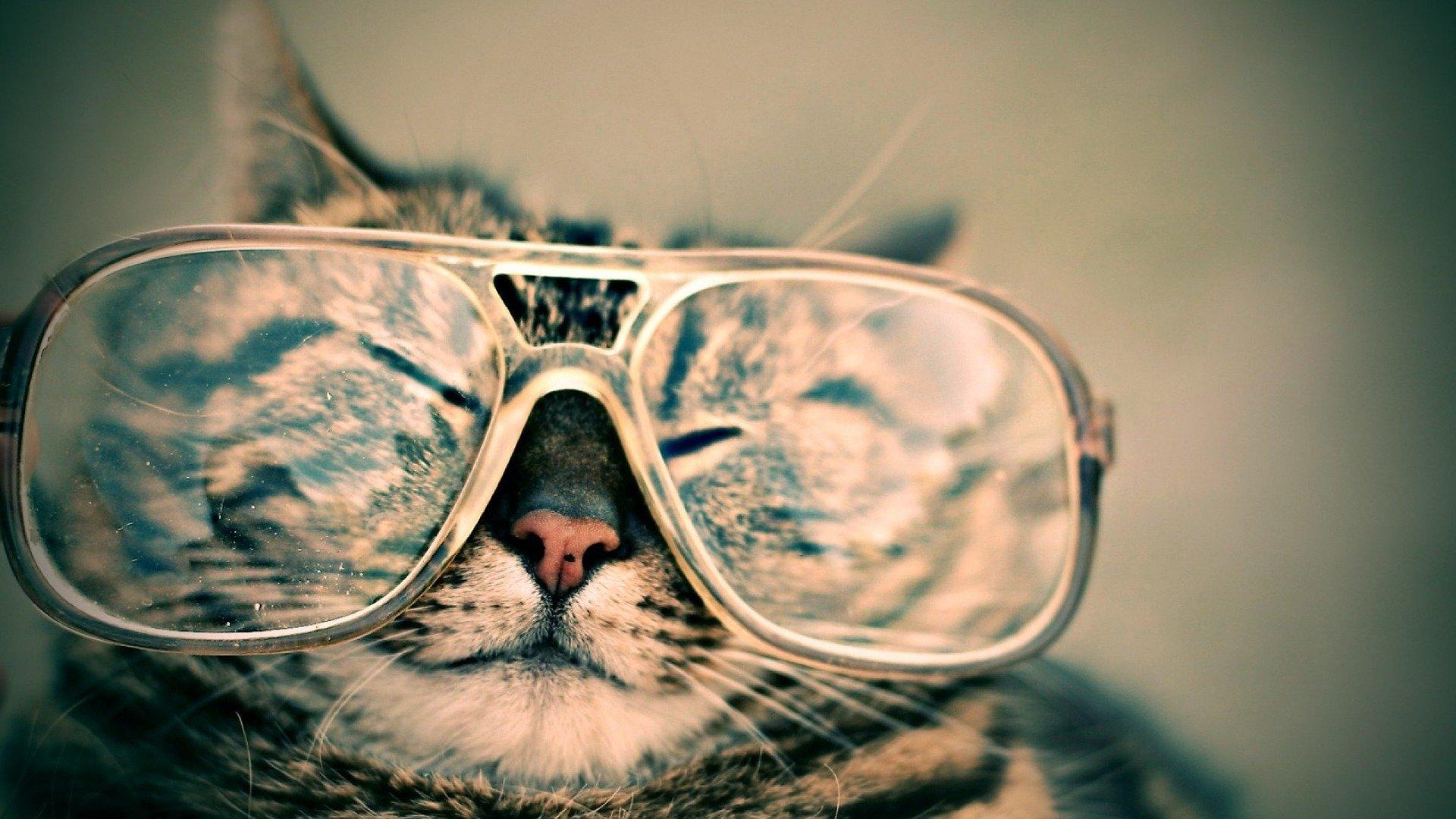 Custom Pet Portraits – Get Pet Portraits