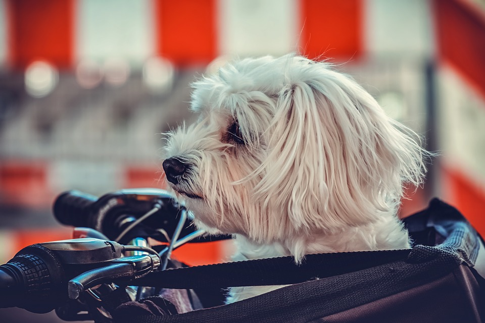 Animal Transport Companies Make It Easier For You To Relocate With A Pet