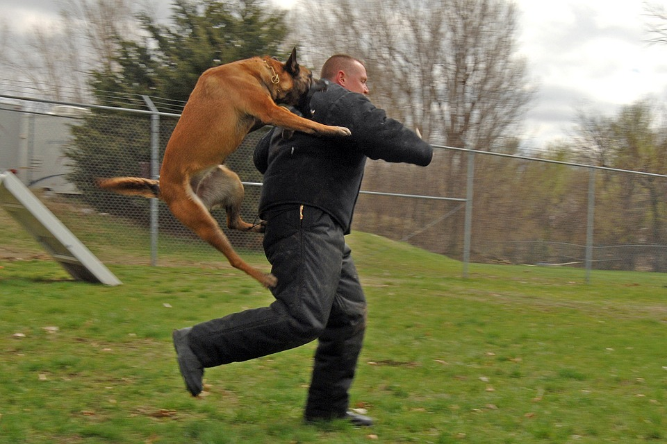 In-home Dog Training Can Make Your Dog Easy To Control