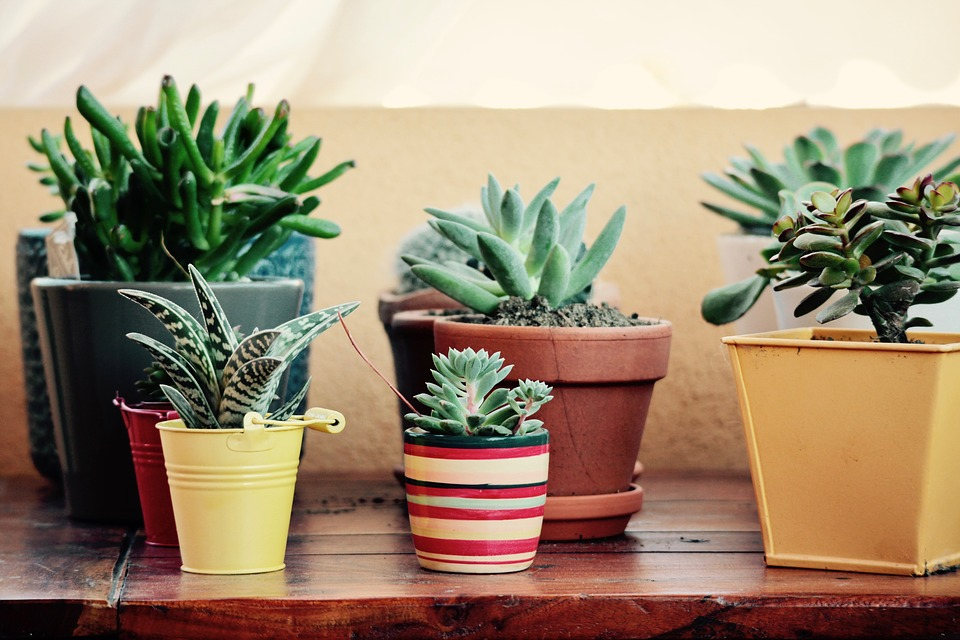 Benefits Of Fabric Pots To Your Garden Plants