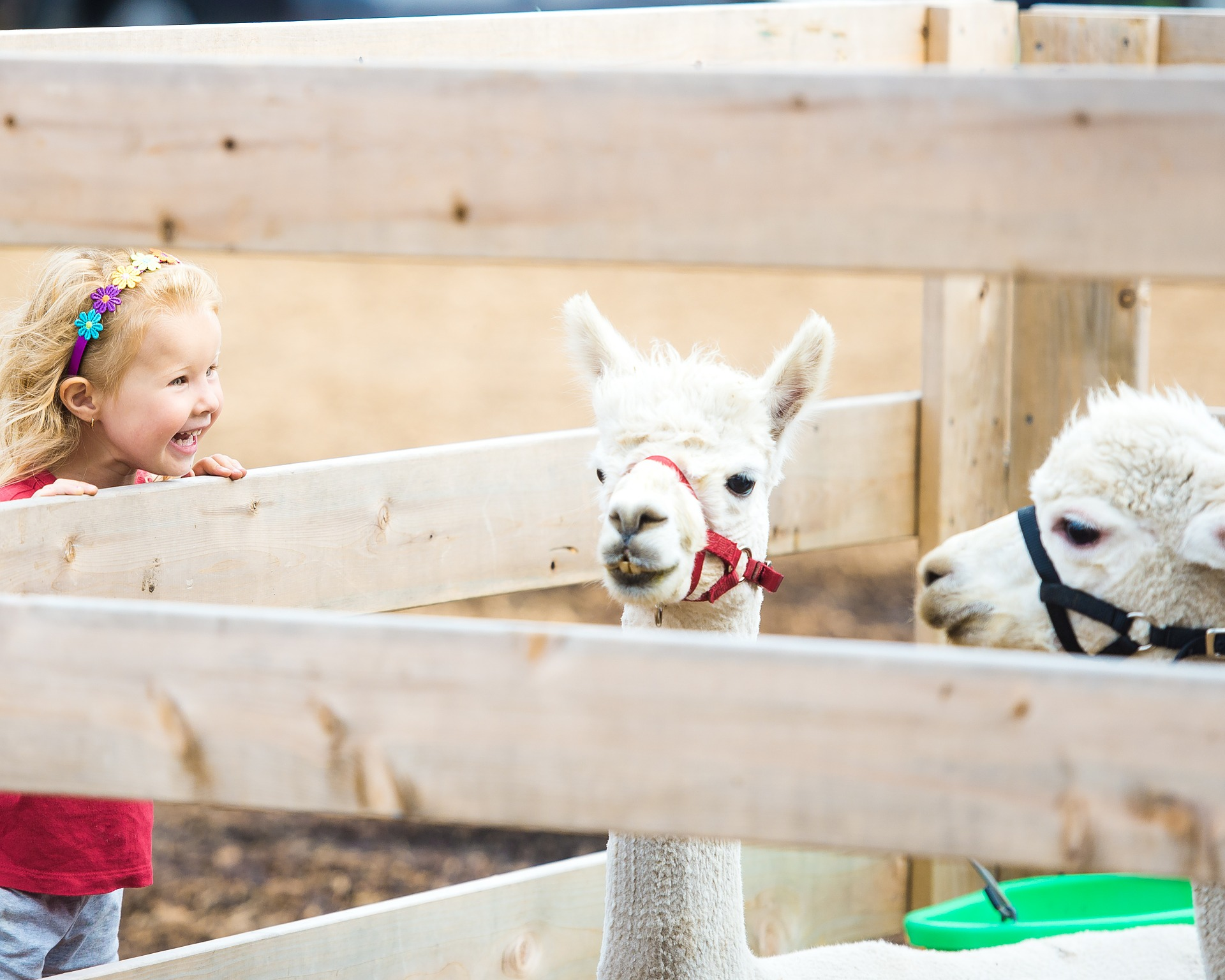 Have Mobile Petting Zoo Rentals For Birthday Party