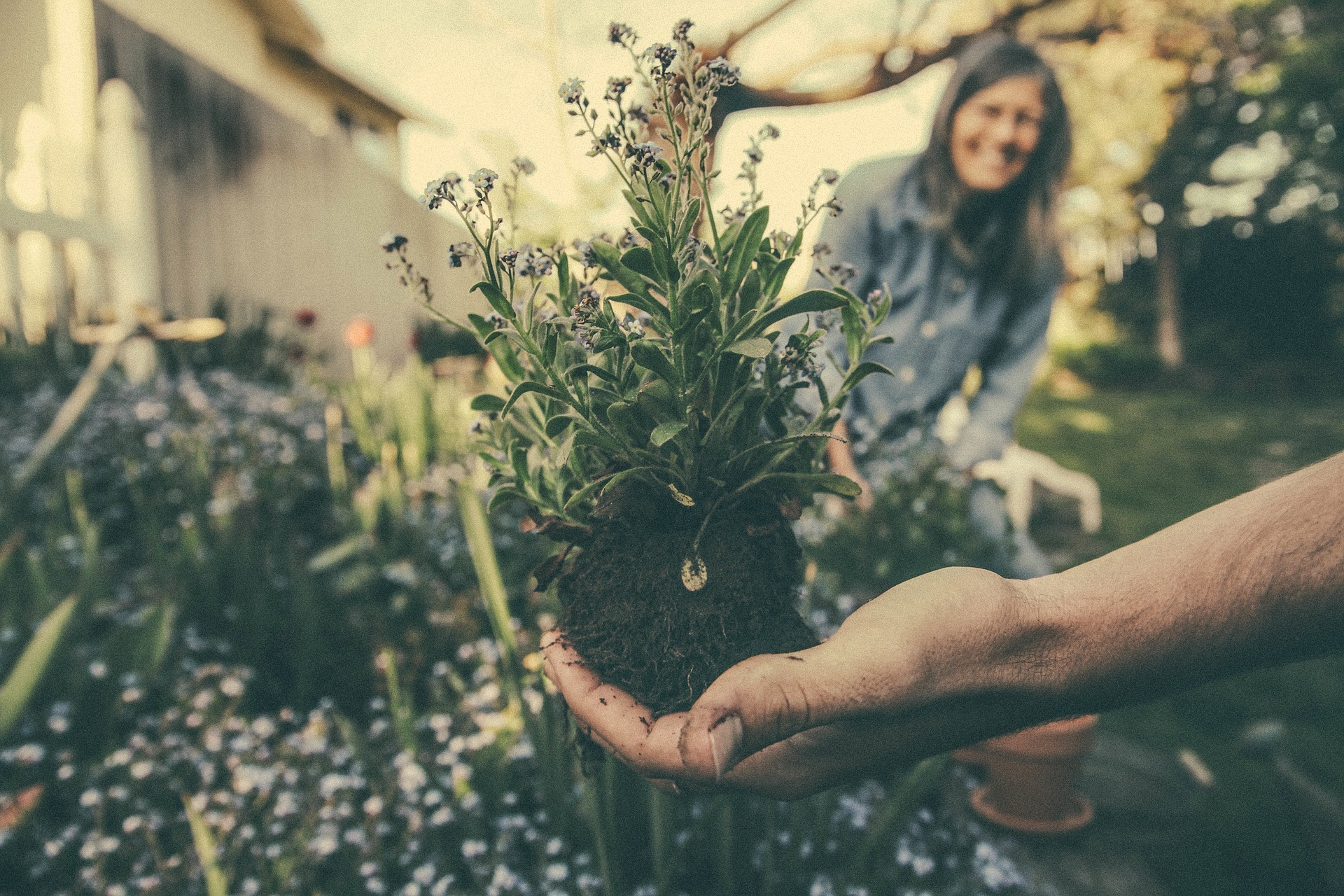 The Many Types And Benefits Of Gardening Services