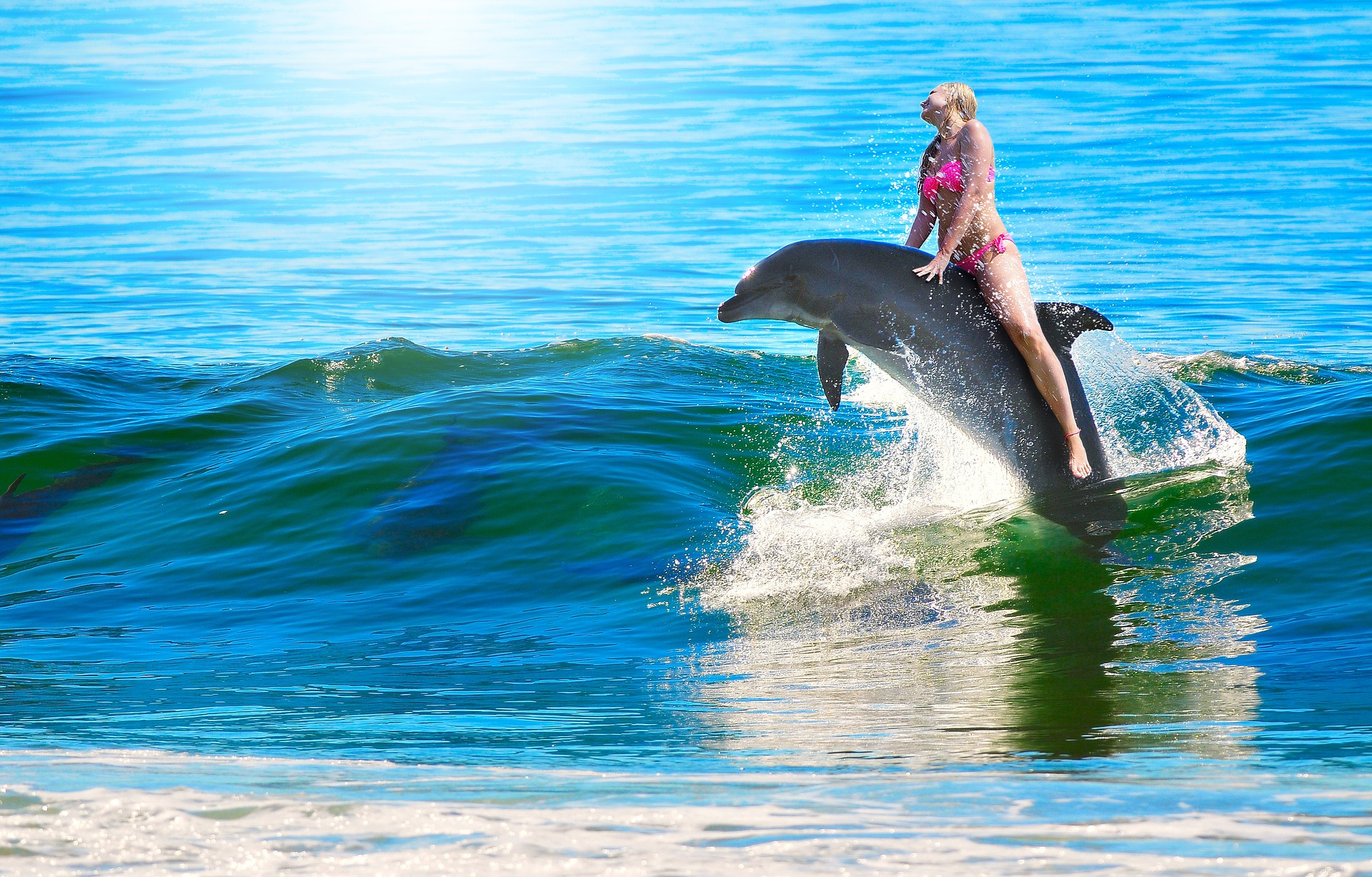 Swimming With Dolphins In Queensland