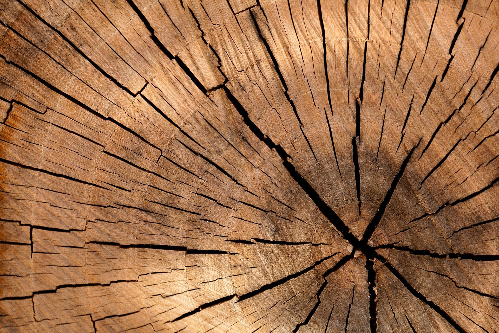 Find High Quality Cheap Tree Stump Removal Today