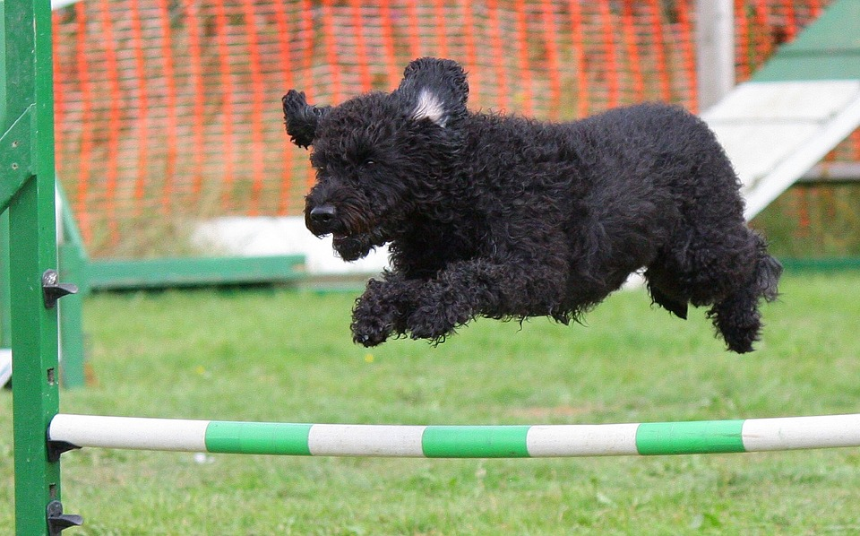 Finding The Best Dog Training Western Sydney Offers