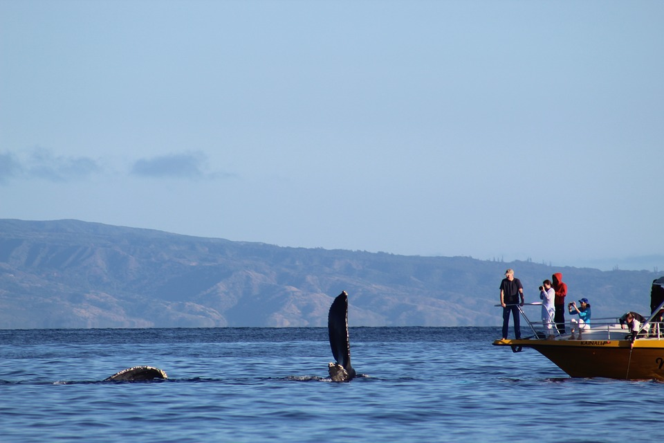Whale Watching Tours Queensland – Explore The Sea With Dependable Accommodation And Transfers